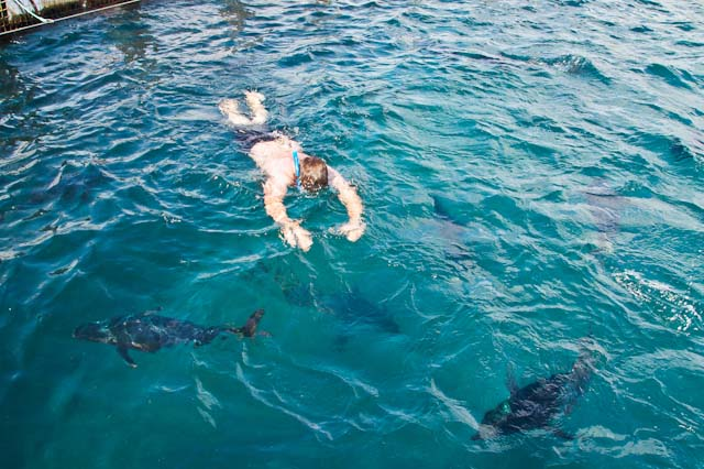 swimming tuna family travel blog Australia kids camping campervan RV