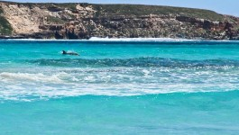Travel blog Coffin Bay